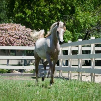 Foals, Zahara, Flowers-617