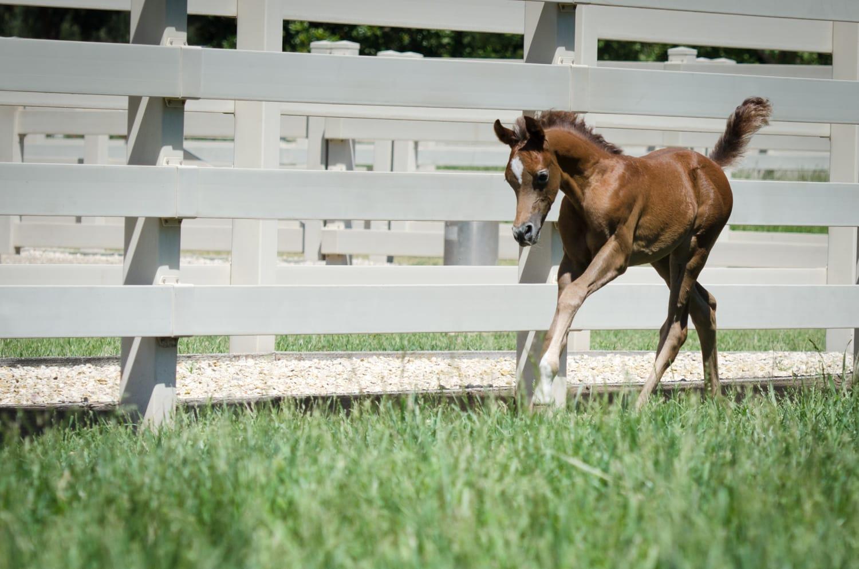 Foals, Zahara, Flowers-421-Edit-Edit-Edit