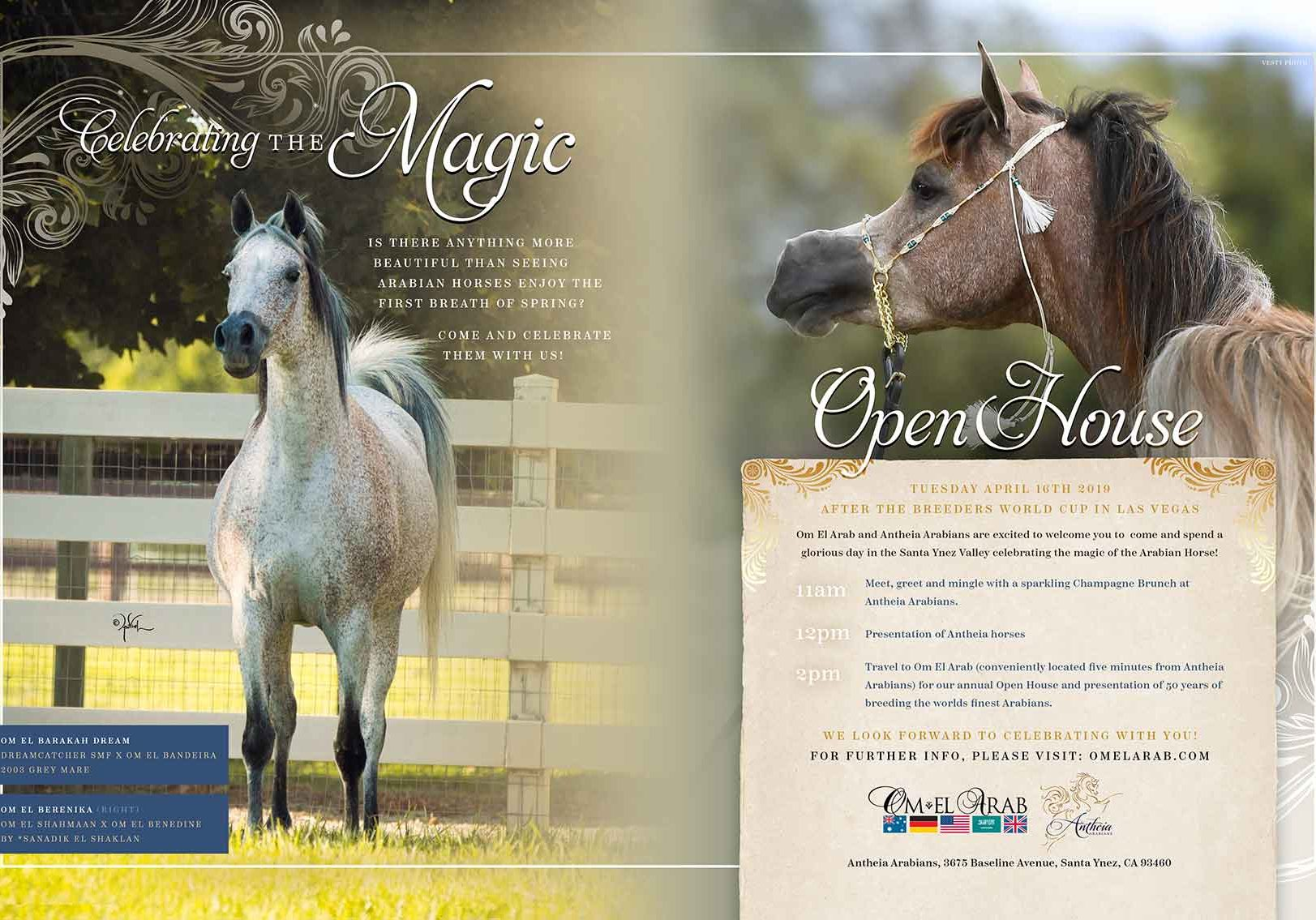 Antheia-Arabians-Open-House
